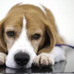 Sunt câinii cea mai evoluată formă de viaţă?