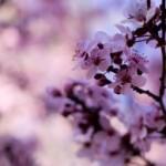 Primăvara vine cu o locaţie nouă