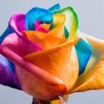 Creativitate şi Spontaneitate în Relaţii (II)